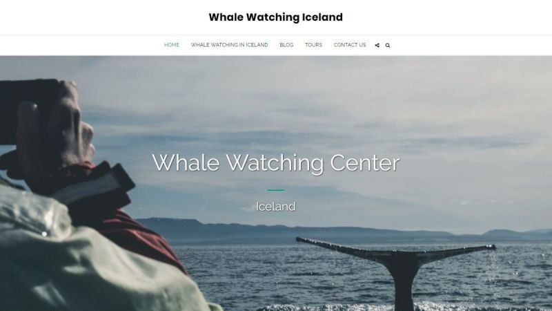 Whale Watching Iceland