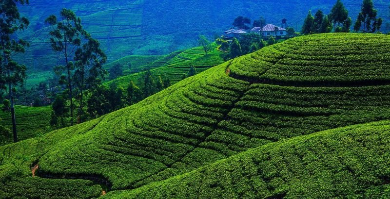 Hill Country Holiday in Sri Lanka