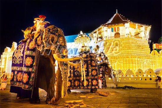 Kandy Esala Perahera 2019 -Sri Lanka