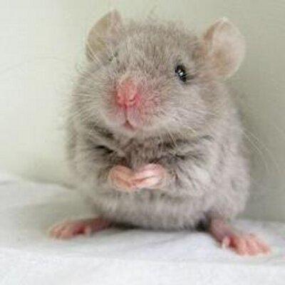 הוא כזה חמוד - העכבר