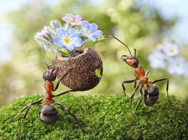 לך אל הנמלה עצל