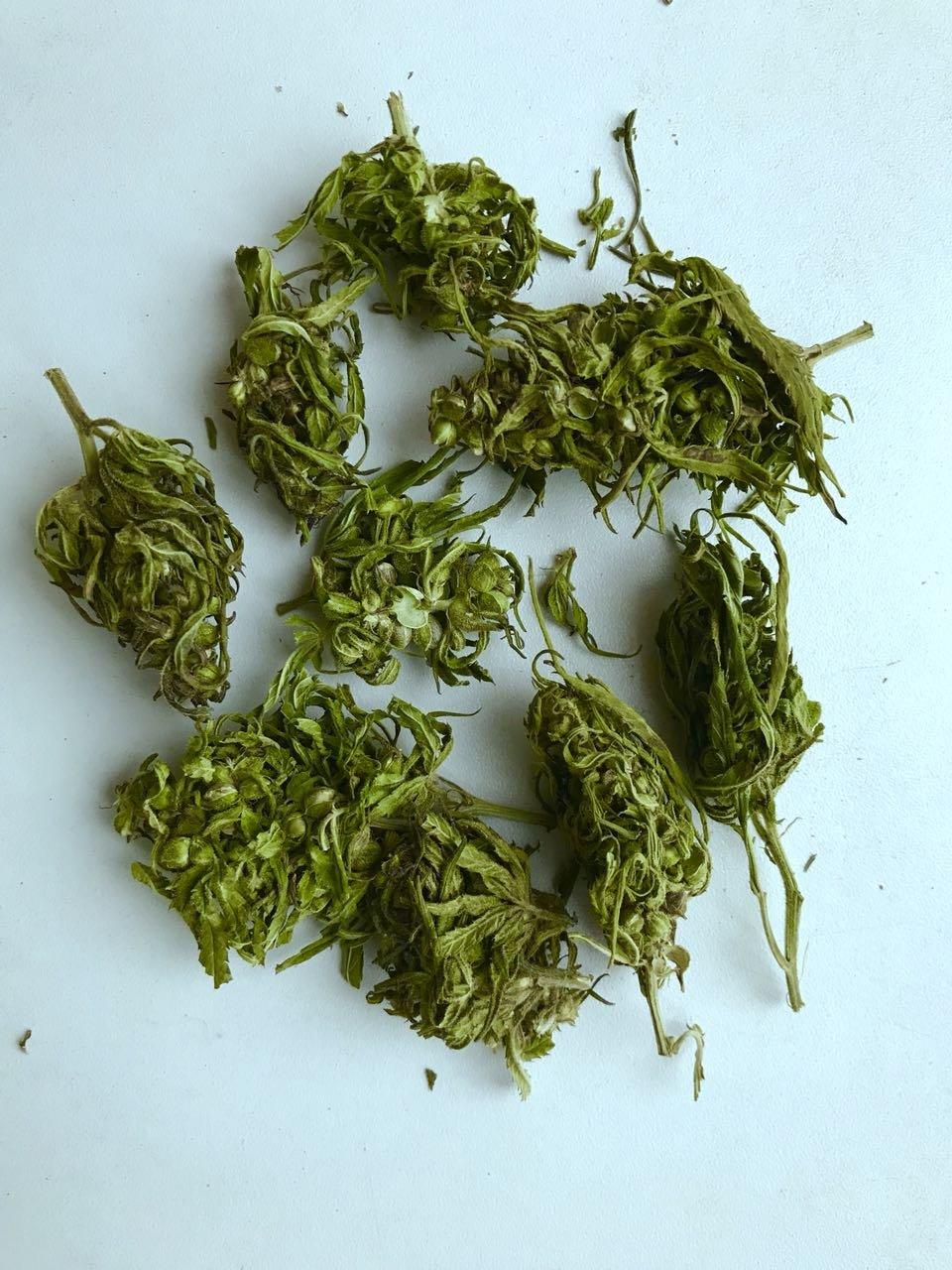 Cannabis sativa, hemp