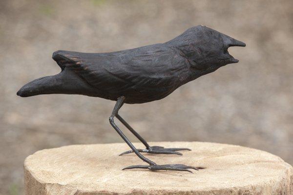Crow's chick