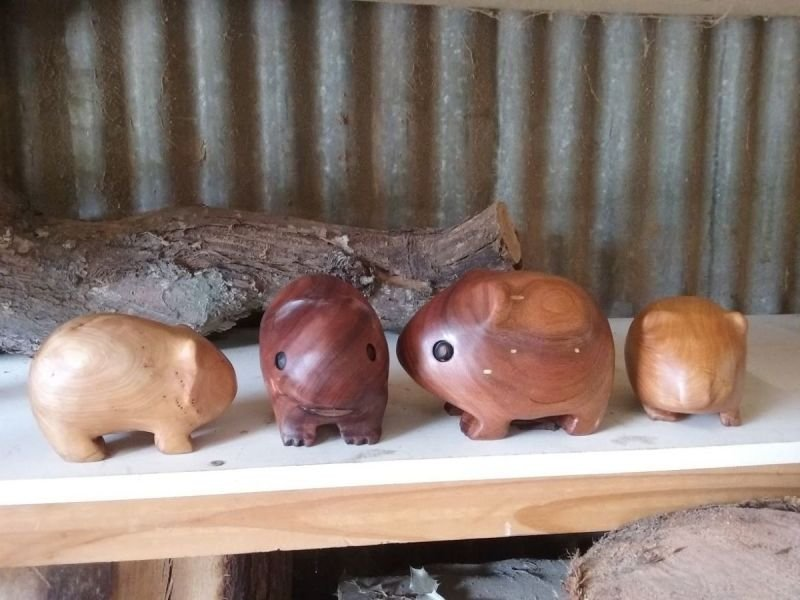 Small wombats