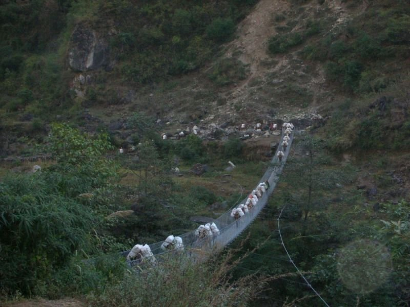 A PONY TRAIN ON A SUSPENSION BRIDGE