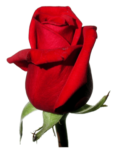 Saint-Valentin jeudi soir 14 février