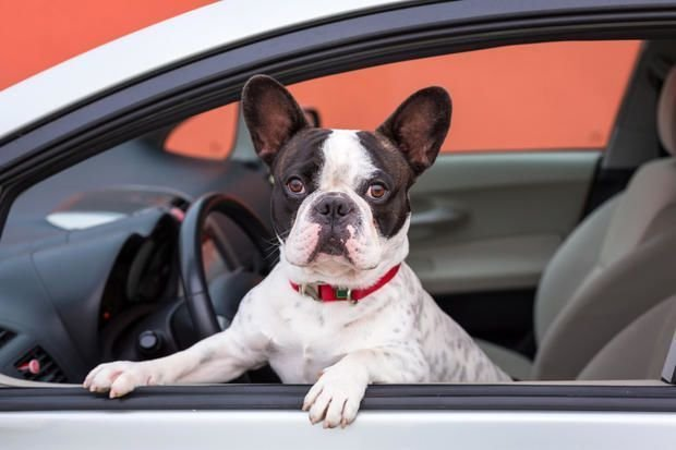 Some of the Consideration to Make When You Are Choosing the Best Dealership in Pet Supplies