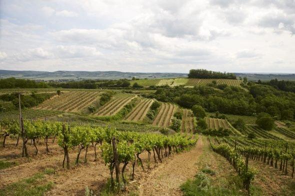 Rakousko - Weinviertel
