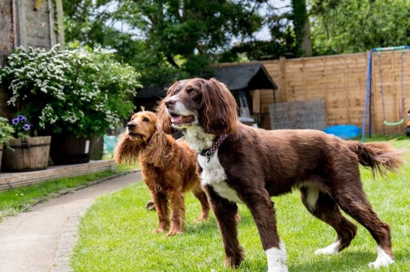 House Sitting - From £25