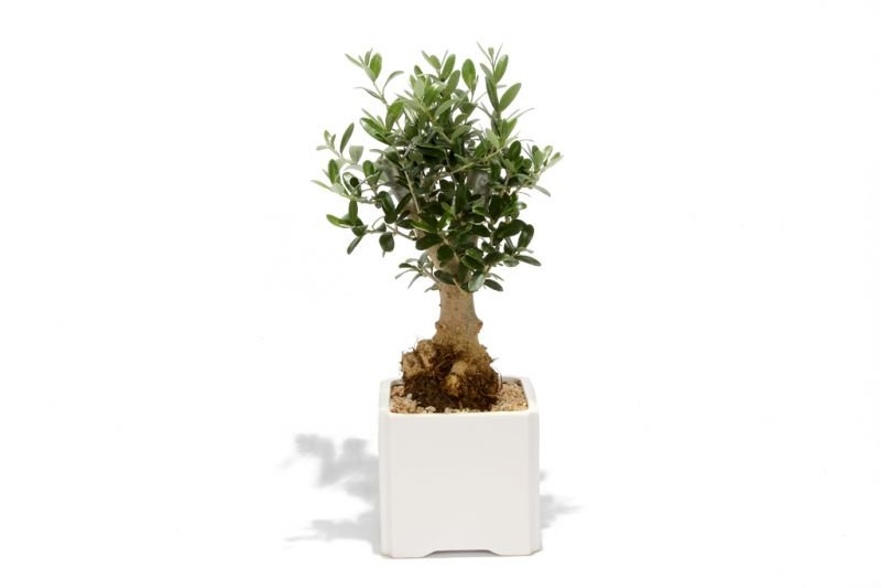 מתנות לחגים, מבחר מתנות לכנסים ולאירועים מסר שלך שלום בעץ הזית
