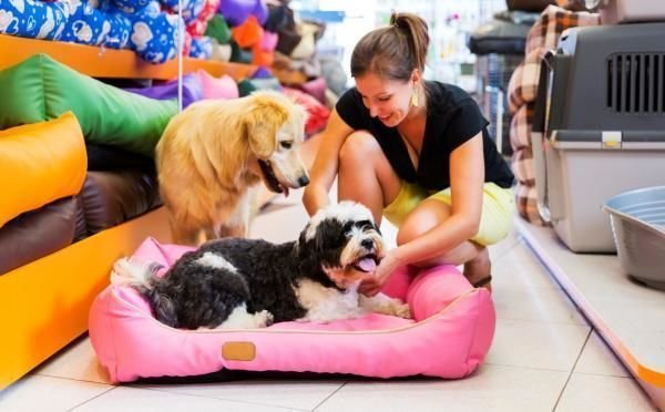 Importance of Pet Supplies