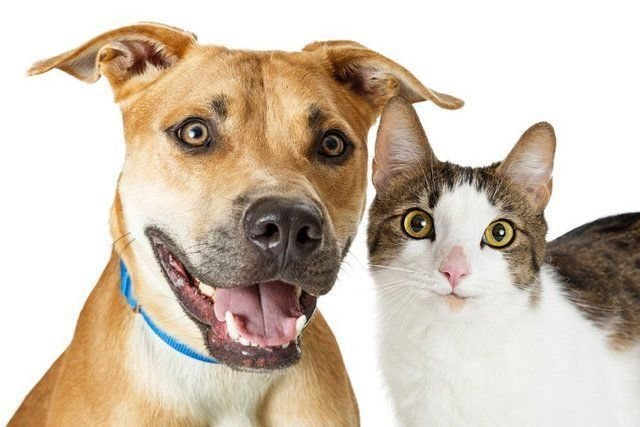 Guidelines on Choosing a Good Pet Supplier
