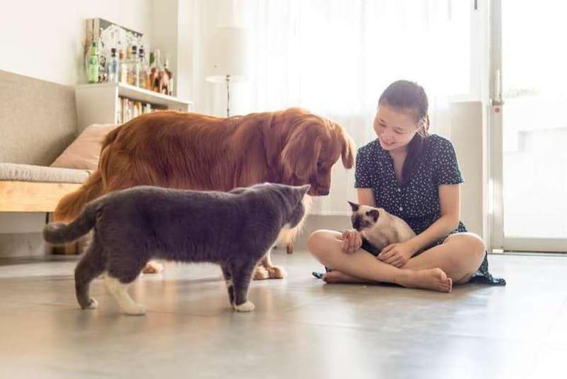 Tips of Selecting Pet Supplies