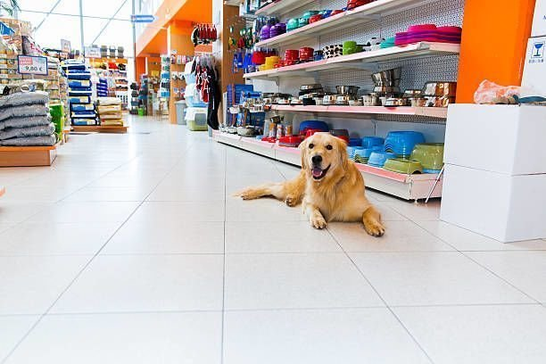 How to Purchase the Best Pet Supplies?