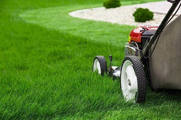 How to Choose the Right Lawn Care Company?