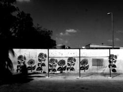 אמיר לבון - צילום