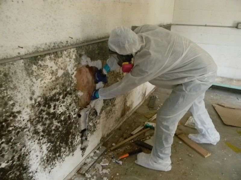 Top Mold Inspection Services