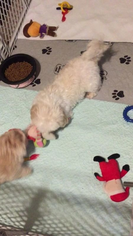 Izzy playing with her puppy
