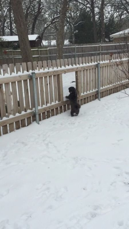 Indigo excited about her first snow experience