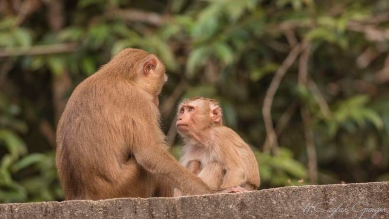 Two Macaques on Roof
