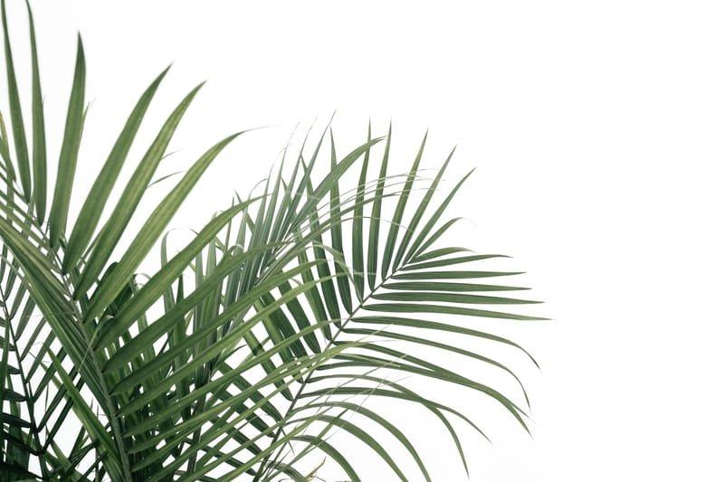 14 April Palm Sunday