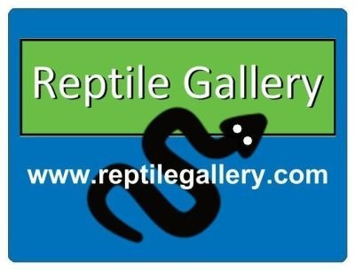 Reptile Gallery Ball Pythons