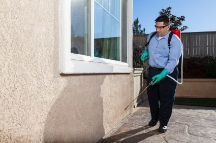 Why is it Best to Get Professional Pest Control Services