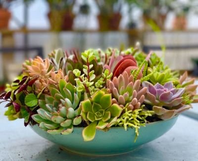 Succulent  (& Air Plant) Care