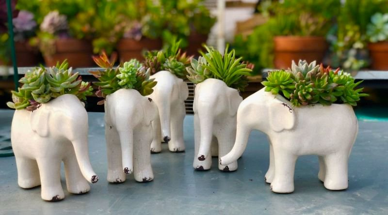 Elephant Herd Class