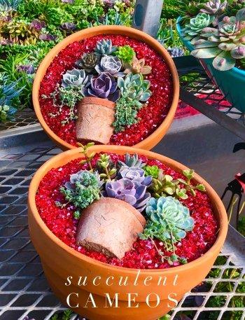 Succulent Cameo Class