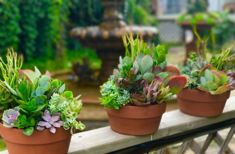 Succulent Bowl Class at Avalon