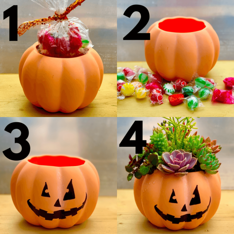 It's The GREAT Succulent Pumpkin Class Charlie Brown (for ALL Ages)