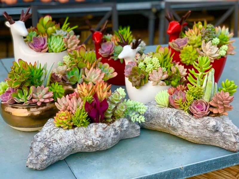 Christmas Succulent Classes