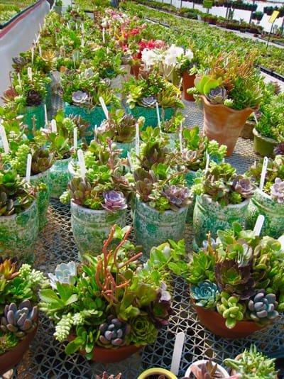 Succulent (& Air Plant) Care