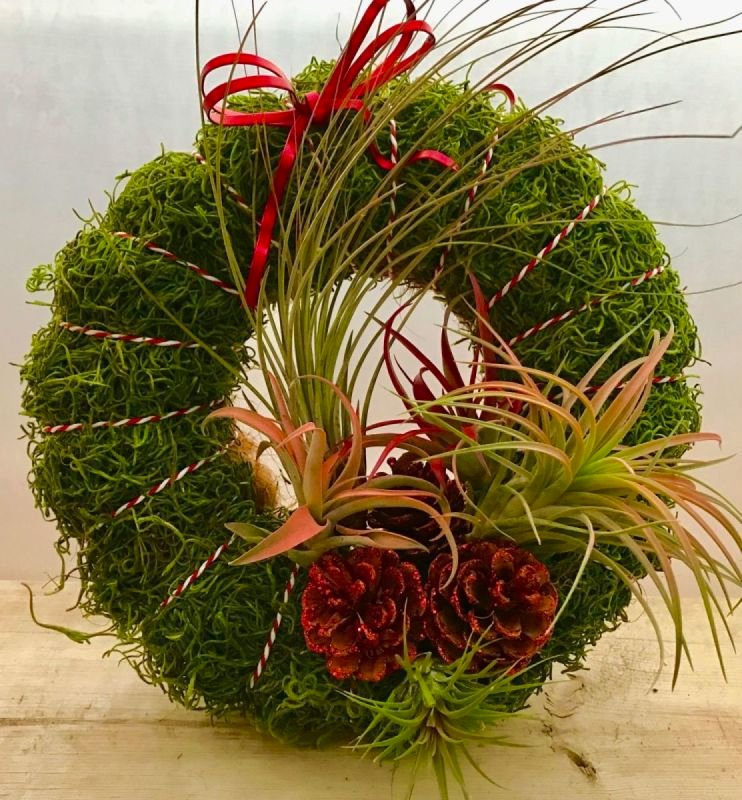 Air Plant Wreath Class