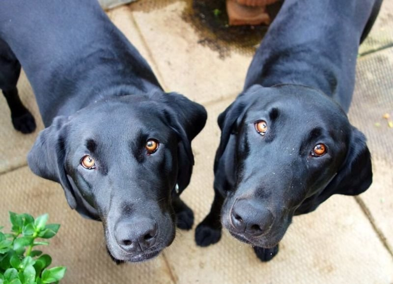 Our 2 beauties - Dexy and Quin
