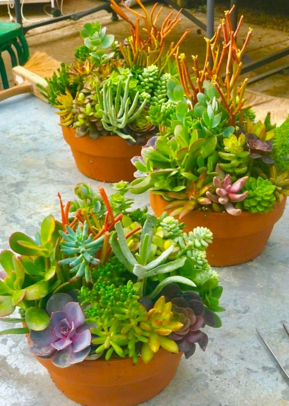 Private Succulent Bowl Class