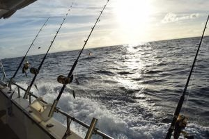 Tips for Choosing the Best Fishing Charters