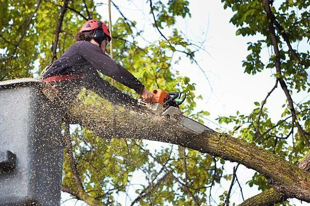 Facts about tree services and tree stump grinding