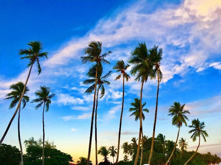 Guayacanes, photo by Jack Loomes
