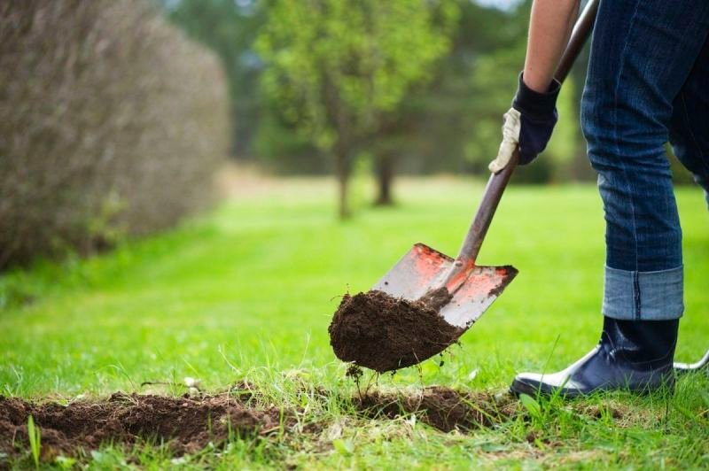 Tree Removal Service Providers