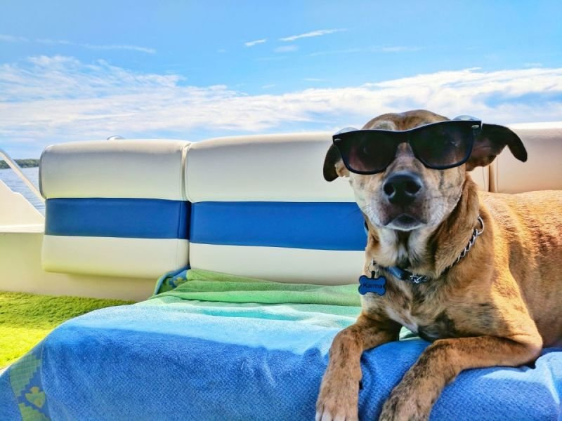 Traveling with your pet tips!