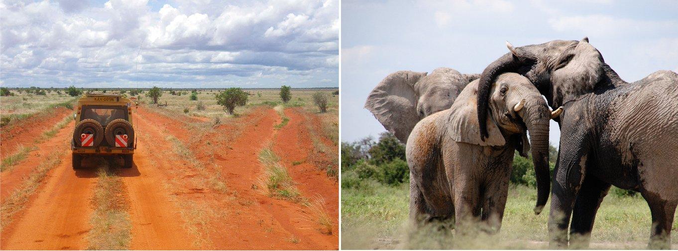 tsavo-east-est-safari-kenya-parco-africa-elefanti-elephant-terra-rossa-safari-fotografico