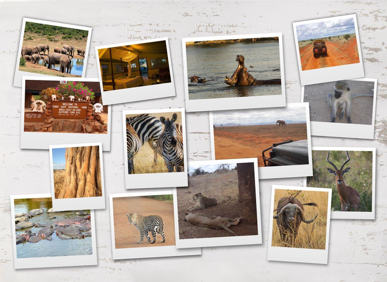 safari-fotografico-kenya-guida-parco-tsavo-est-east-animali-leone-savana-guida