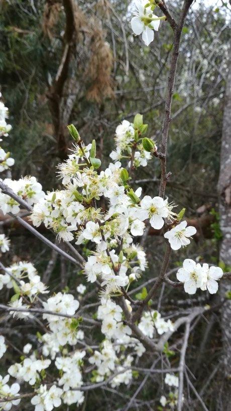 Plantes medicinales selon les saisons