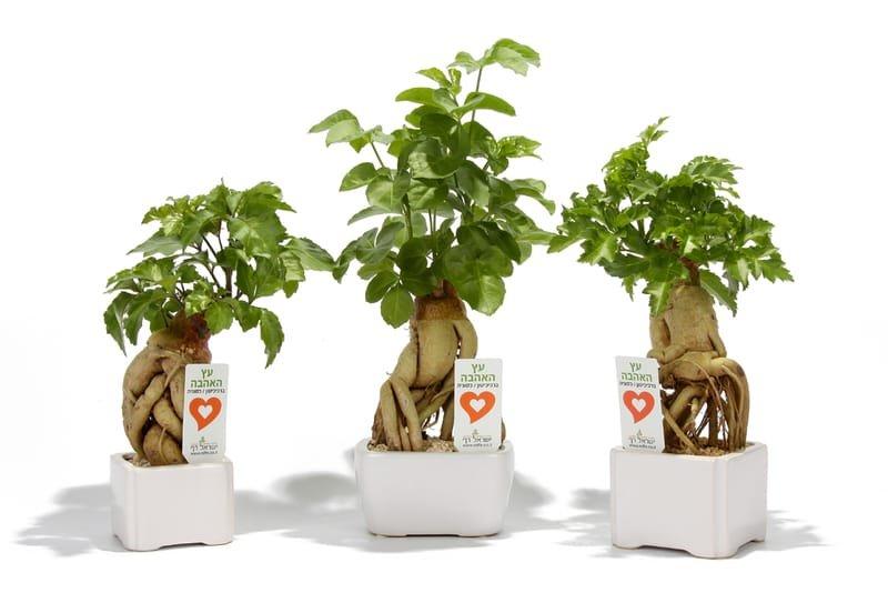 מתנות לעובדים לראש השנה, מתנות לאירועים עסקיים ופרטיים מסר של אהבה בעץ האהבה
