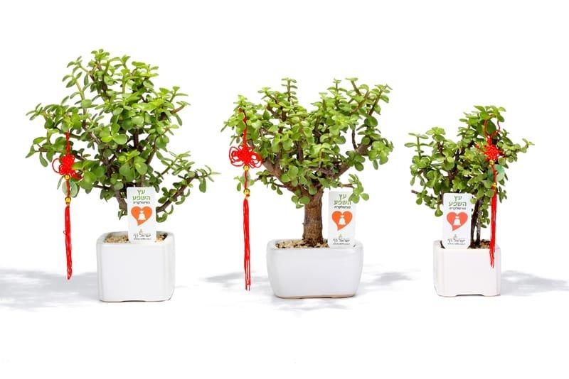 מתנות לעובדים לראש השנה, מתנות לאירועים עסקיים ופרטיים מסר של שפע בעץ השפע