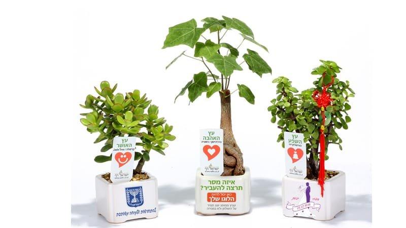 מתנות לכנסים ותערוכות, מתנות לאירועים עסקיים ופרטיים מבחר מסרים ממותגים בעציצים