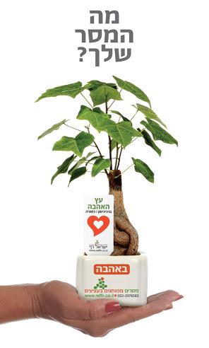 מתנות לטו בשבט, מתנות לעובדים, מתנות ללקוחות, עציצים ממותגים