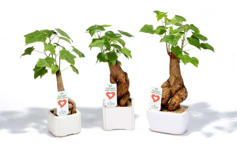 מתנות לעובדים לראש השנה, מתנות ממותגות שנותנות יותר מסר של אהבה בעץ האהבה